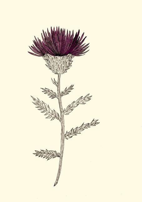 Cardoon/wild flower - mixedmedia - spoto | ello