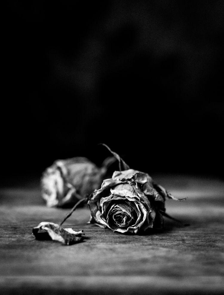 Faded - blackandwhite, bnw, roses - nataliabalanina | ello