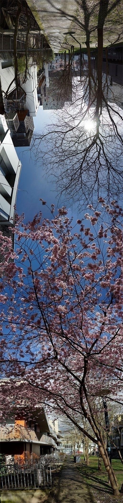 Le 4 avril, panorama presqu'ide - gclavet   ello