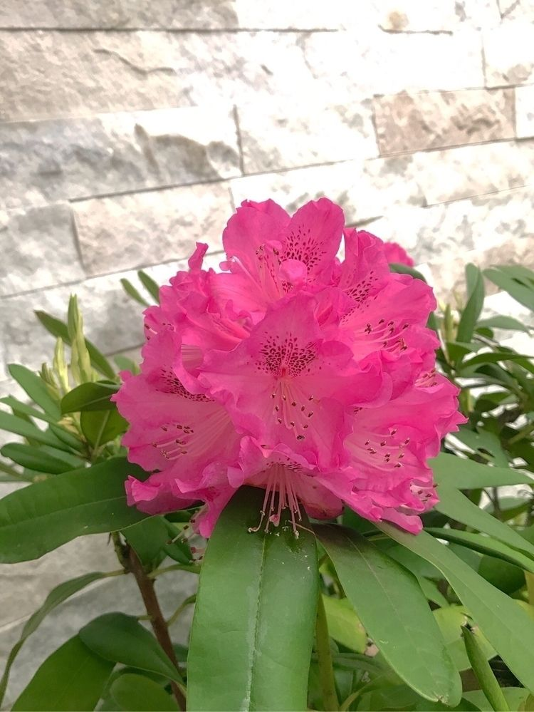 pink, flowers - mamimumemami | ello