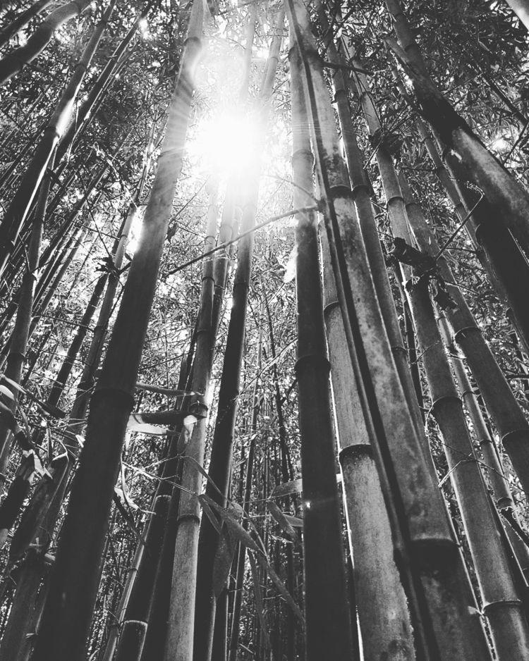 Bamboo - photography, blackandwhite - paolosommariva | ello