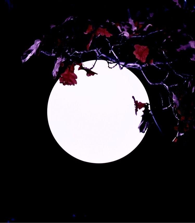 Simplicity, focus details light - bonesmohr | ello