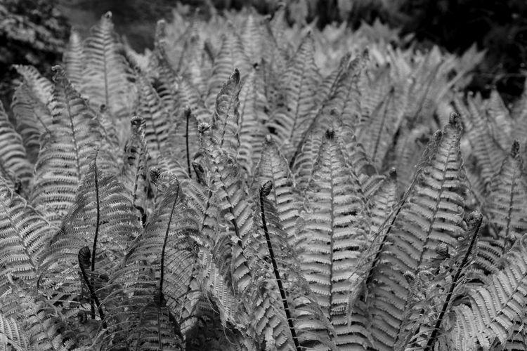 Park Arboretum - Seattle, Ferns - usnrmustang | ello