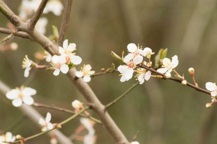 Spring Germany – Nikon D5300, 2 - christinakrost | ello