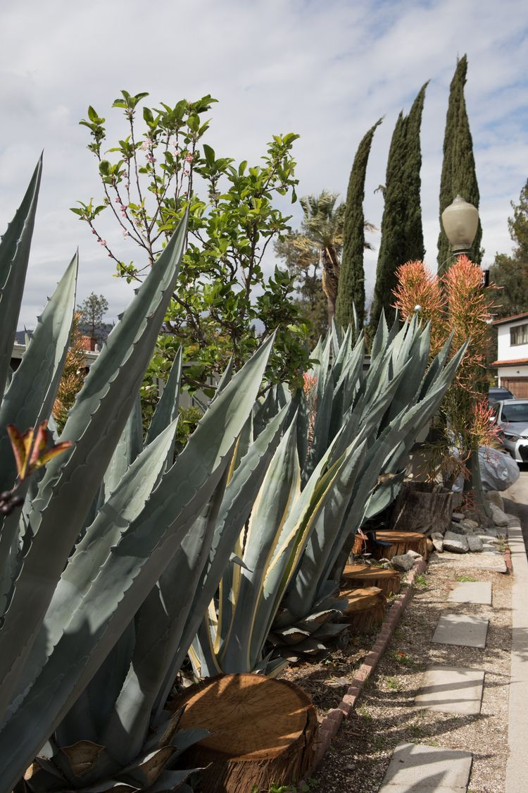 Prevailing Plants, Micheltorena - odouglas | ello