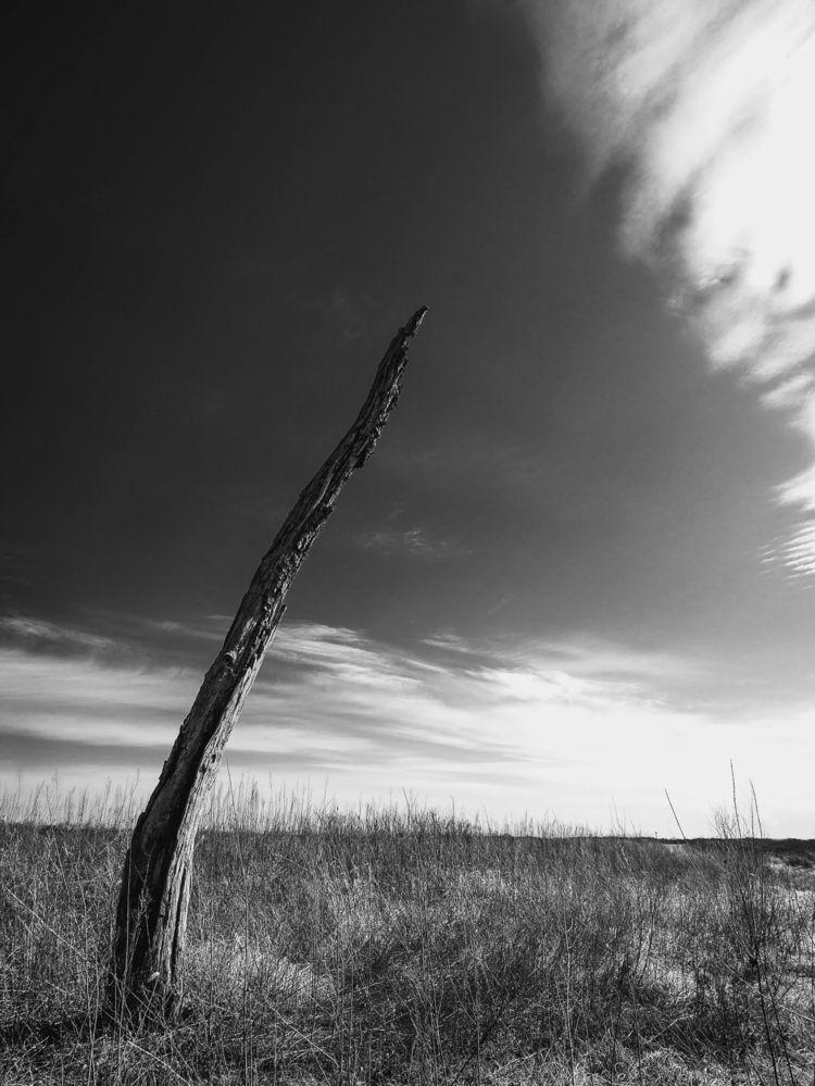 solitary tree field dry grass.  - toddhphoto | ello