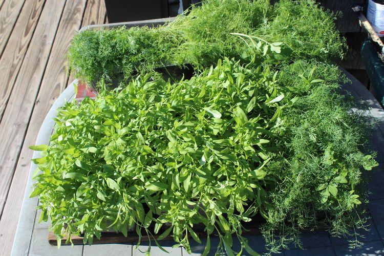 plants ready warmer weather. go - ejfern28   ello