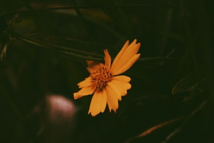 yellow, flower - rakharakids | ello