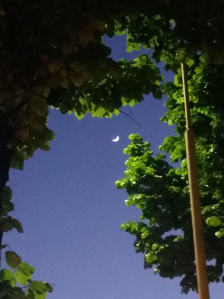 Submitted Moonlight - esterina | ello
