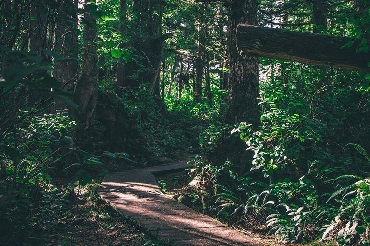 Tofino, Naturephotography, ferns - samcondy | ello