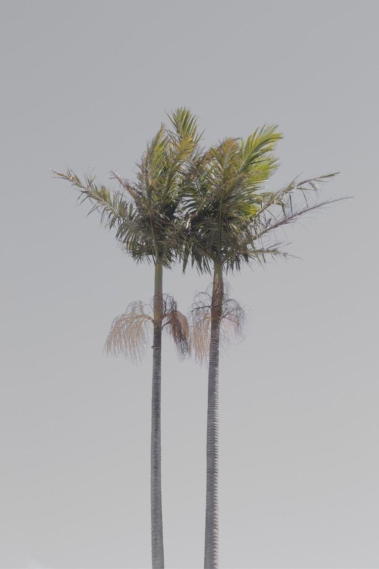 palmtree, summer, tree, pal - jokalinowski_ | ello