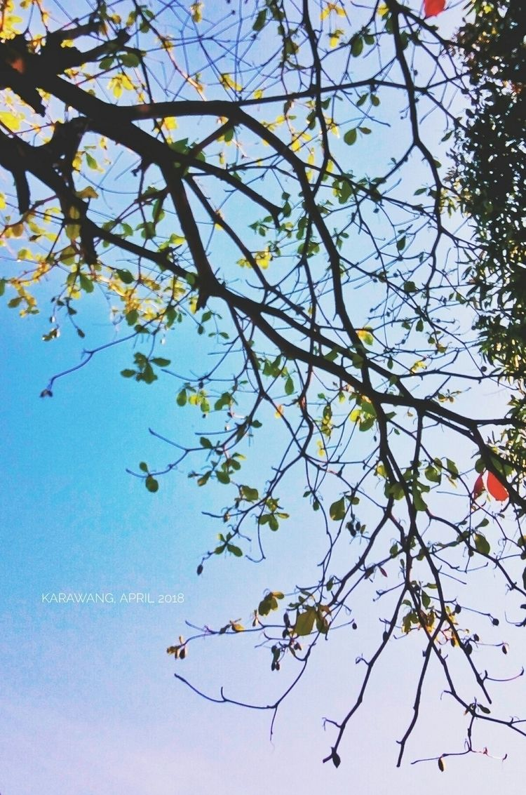 sky, blue, skyporn, nature, alcatel - dhunno28 | ello