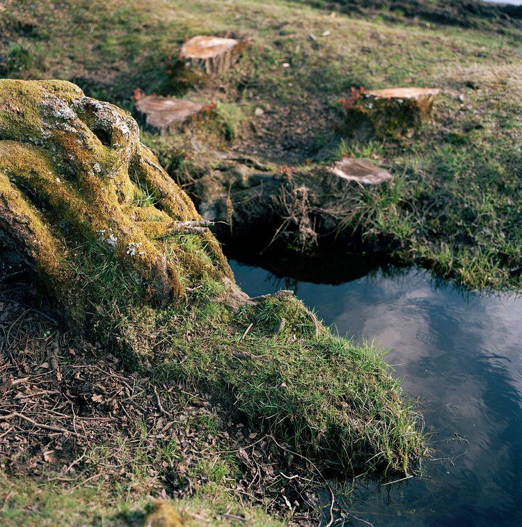 Forest, Kodak Portra 160 - filmphotography - domreess | ello