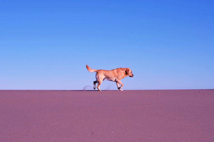 Simon  - dog, sand, beach, life - fruitsfluid | ello