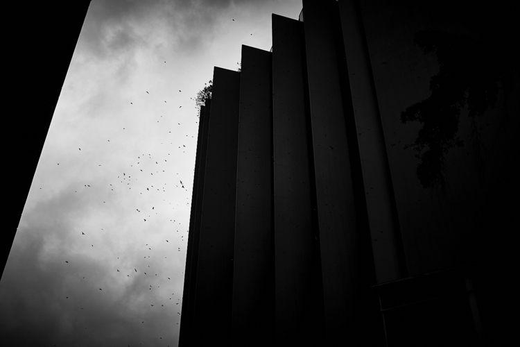 Cluster de Aves Gustavo Lagarde - guslag | ello