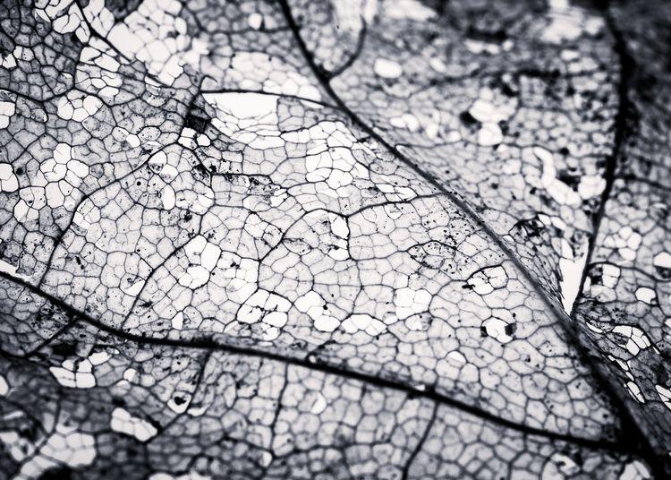 texture summer - nature, leaf, macro - peter_skoglund | ello