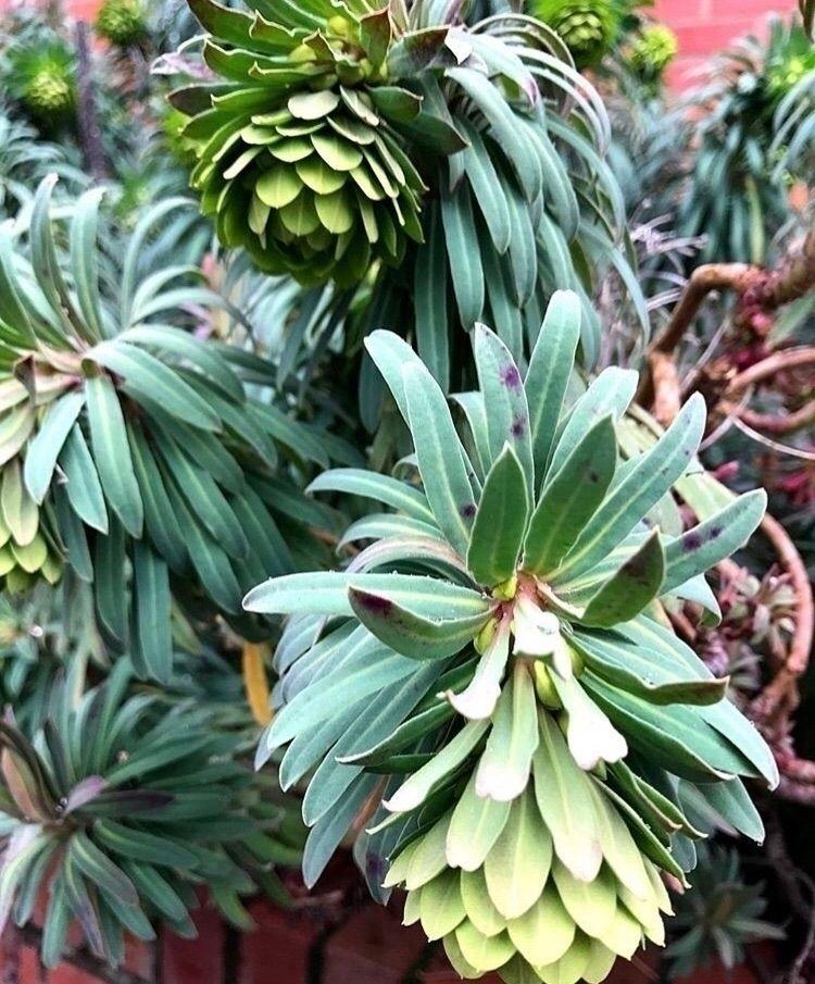 plant Oregon - travelinspired, seetheworld - phobic_mango   ello