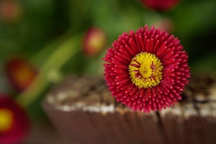 Explo - photography, flower, macro - marcushammerschmitt | ello