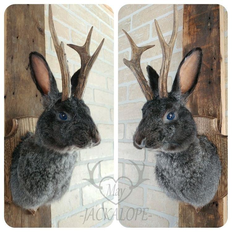 small rabbit jackalope taxiderm - mayjackalope | ello