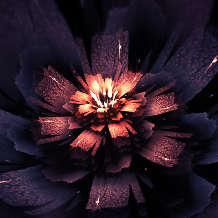 midnight, apophysis, bloom, flower - tatasz | ello