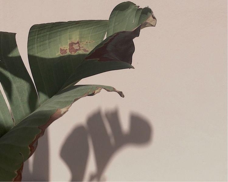 Shadow Freakishness Mimicry :co - veefulness | ello