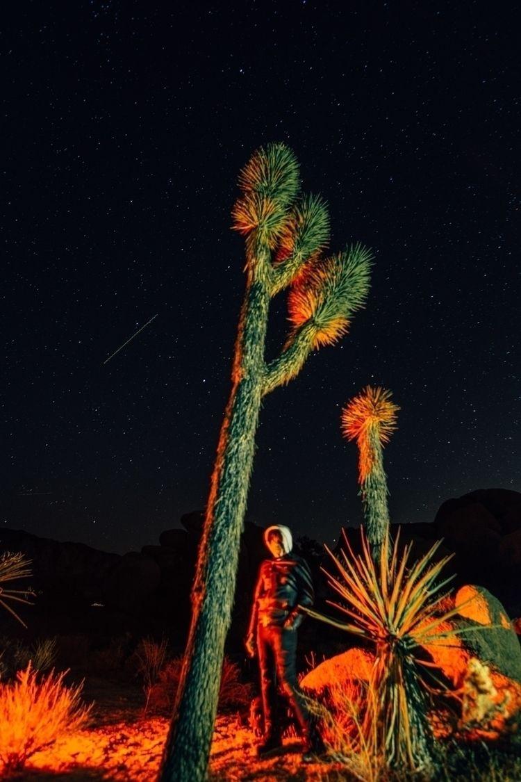 portrait Joshua Tree, Palm Spri - malikesidibe | ello