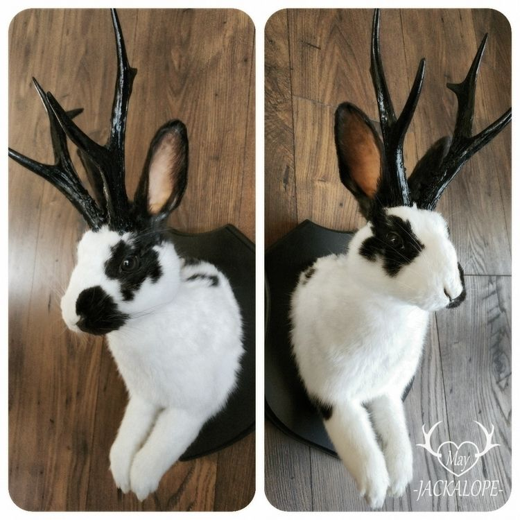 Cute white black rabbit jackalo - mayjackalope | ello