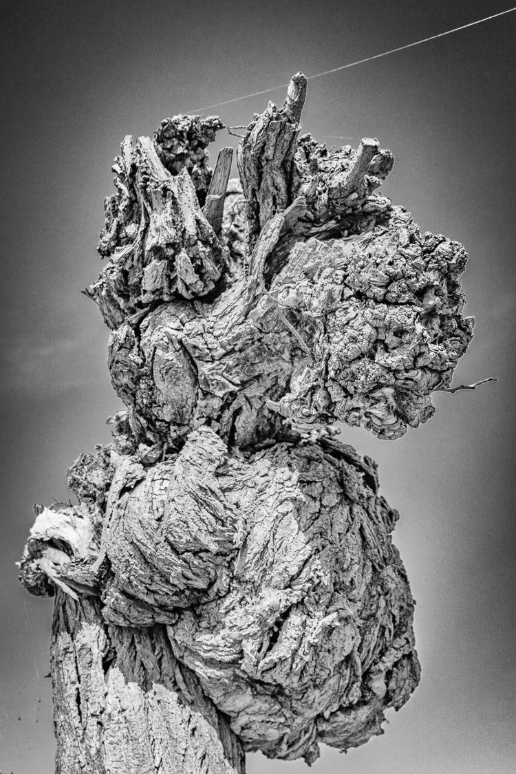 Willow Tree - ellophotography, blackandwhite - gkowallek | ello