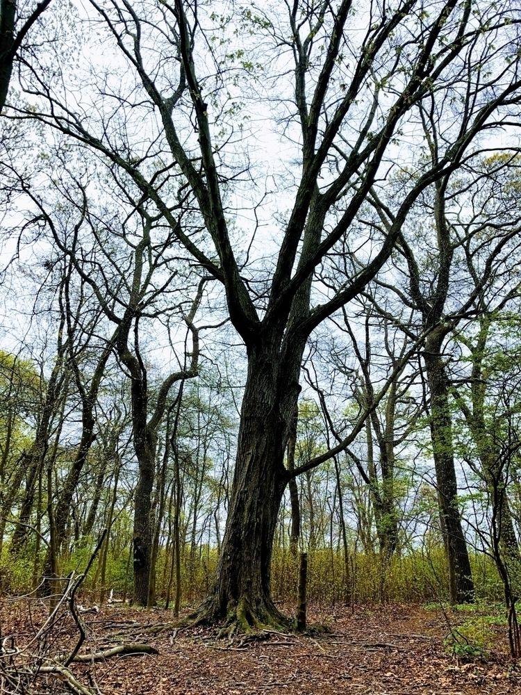 nature, island, spring, trees - boymbe | ello