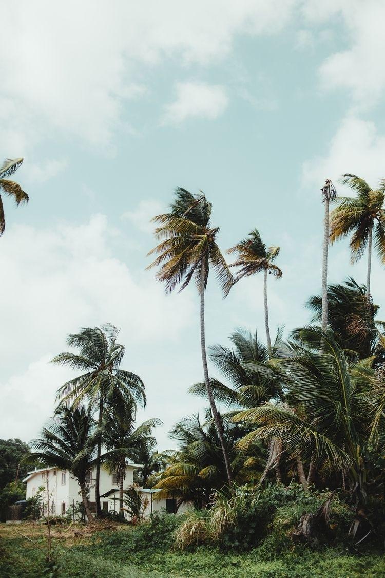 Mayaro, Trinidad - bernardalexander   ello