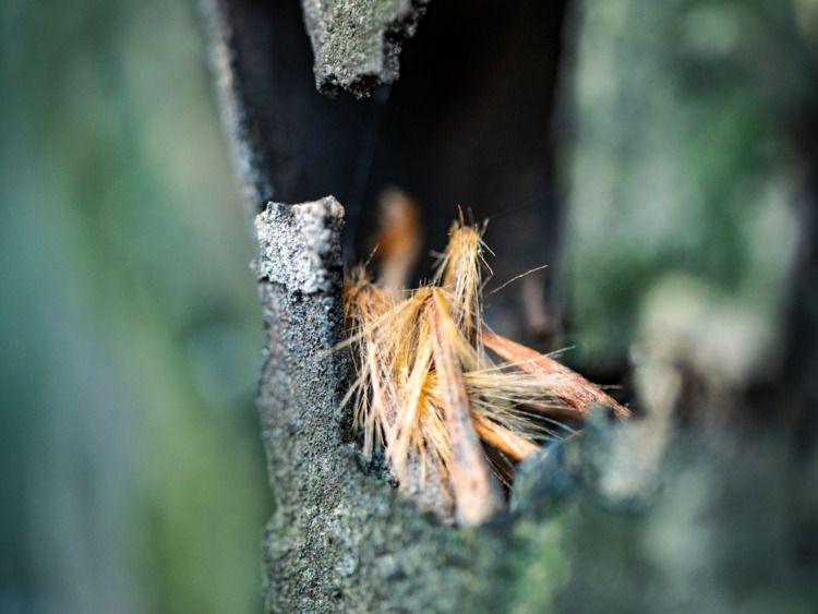 Hole Tree Photographed Dzordza  - maynard | ello