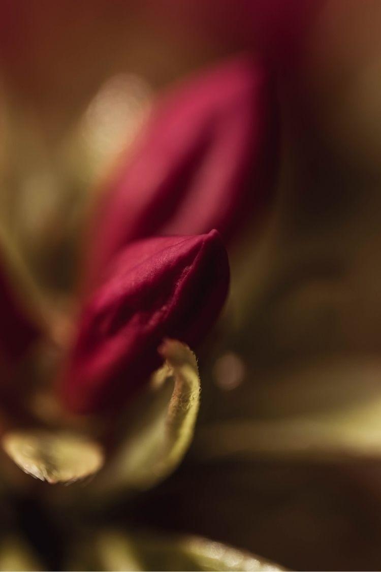Bloom - Spring, Macro, Flowers, Petals - jaimeasaro | ello