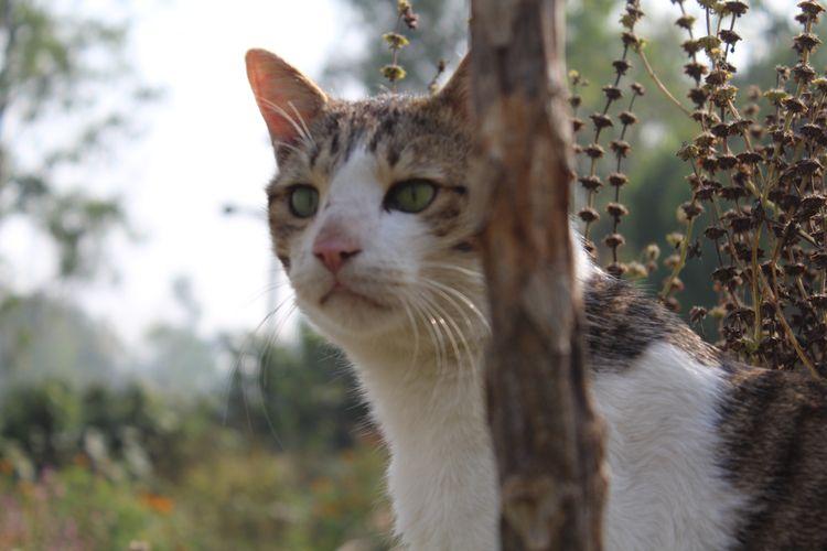 kitty, cat - devenrathore | ello