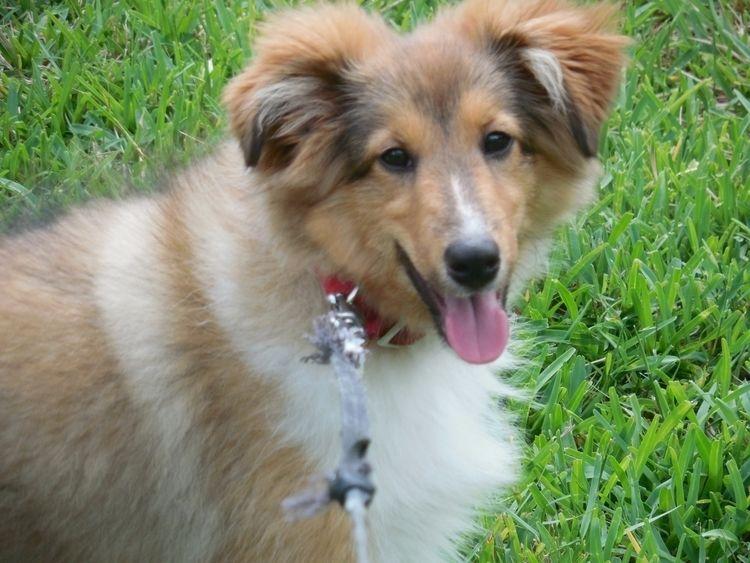 Sassy Pup - jerdub | ello