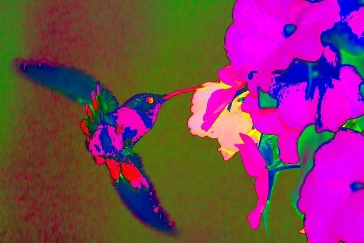 3 Images hummingbird. Humming B - davidapeterson | ello