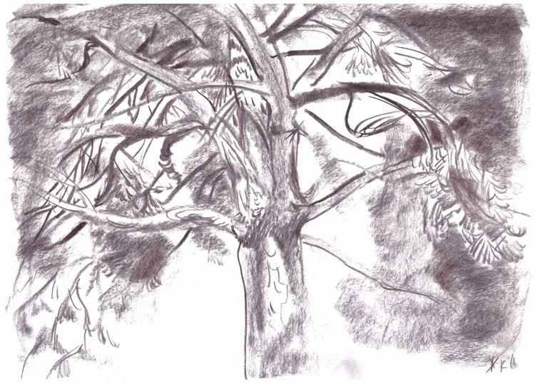 pine. Paper, charcoal - drawing - eugeniakrutova   ello