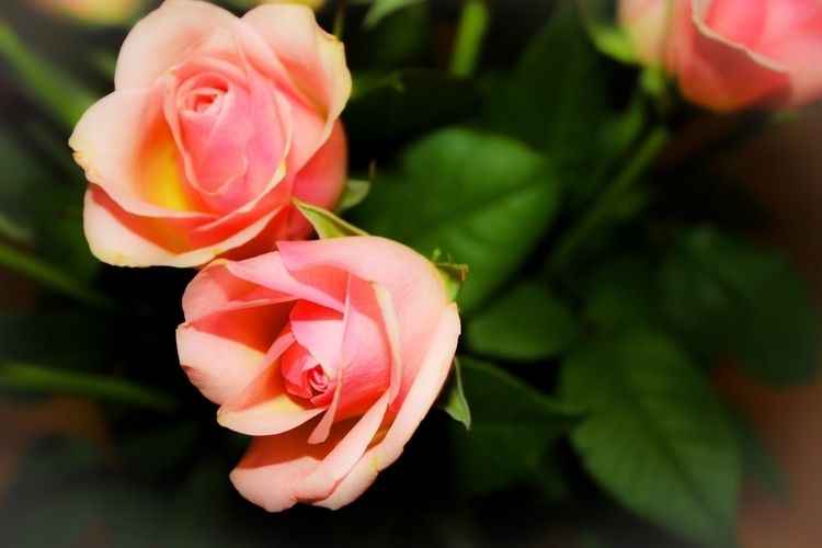 Memoriam sweet grandma peaceful - sacrecour | ello