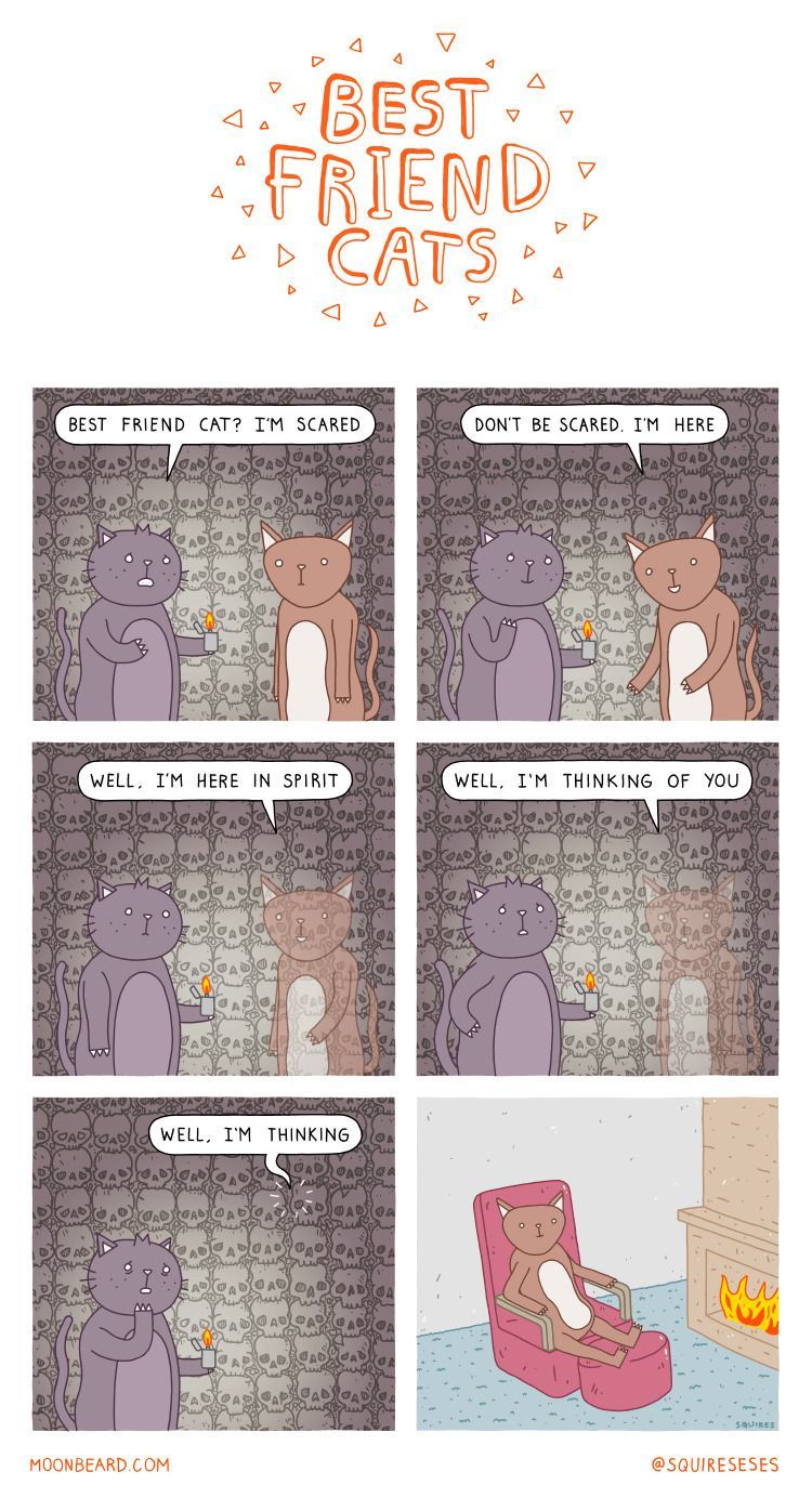 friend cats comic Moonbeard.com - squireseses | ello