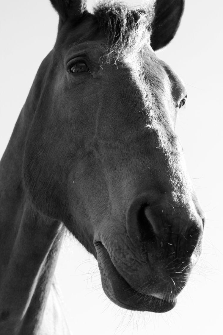 camera, blackwhite, black, white - julia_azz | ello