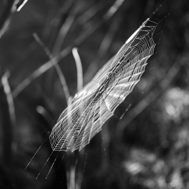 Spiderweb - blackandwhite, spiderweb - martincasas | ello