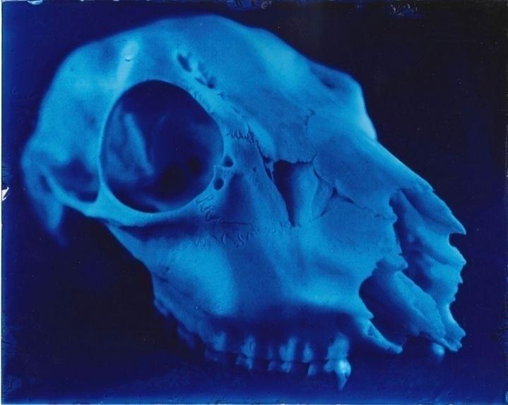 Cyanotype glass - photography, cyanotype - elainespringall | ello