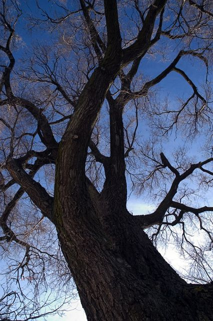 Tree - 5 - photostatguy | ello