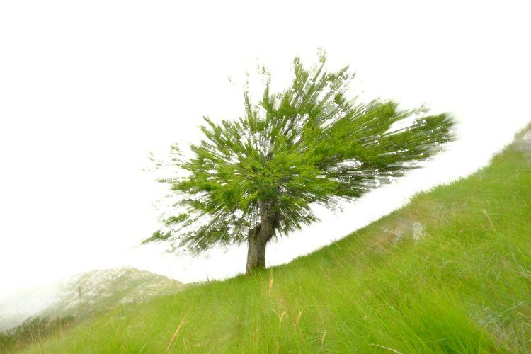 Green Bang - jonlanbroa | ello