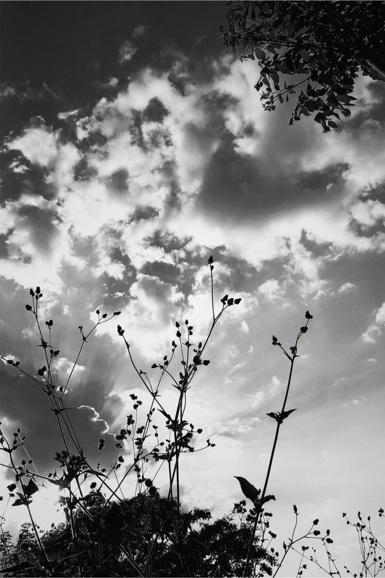 shining sun - sky, cloudy, plant - enriquepereanez | ello