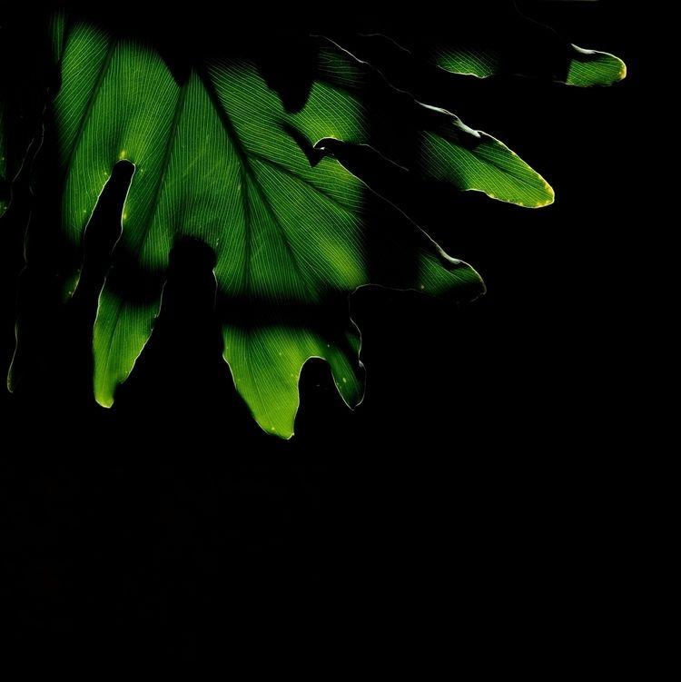 untitled, 2015, Carla de Sousa - carladesousa | ello