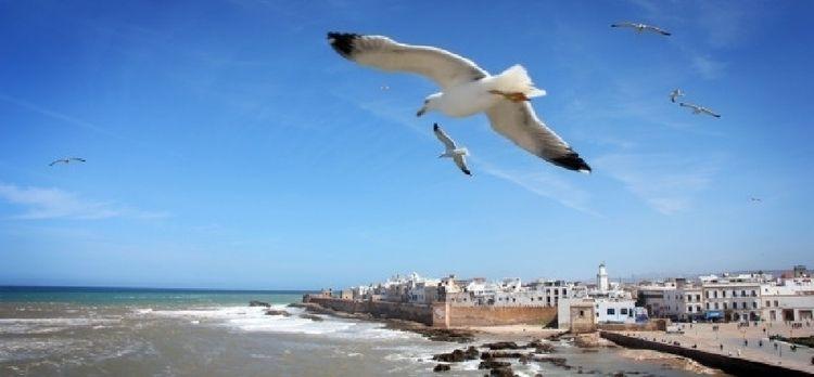 thinking visit Marrakech confus - marrakechandcasablanca   ello
