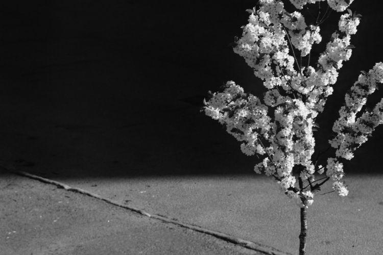 Axial tilt - photography, blackandwhite - lazar_m | ello