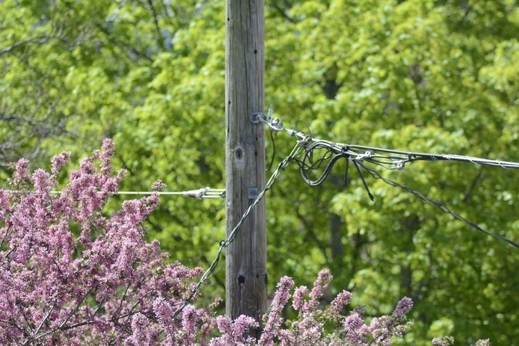 Spring, Telephone Pole, Grand V - jgreinerferris | ello