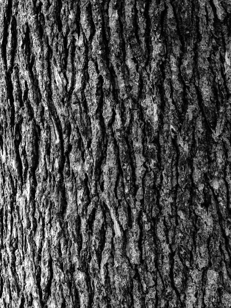 Abstract Bark White - 1, photography - samandmaxphoto | ello