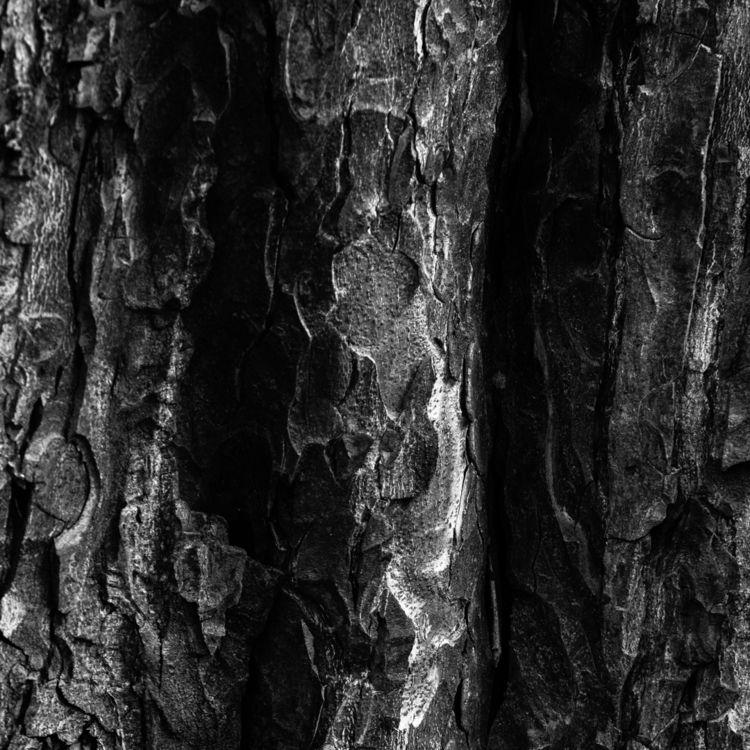 Abstract Bark White - 2, photography - samandmaxphoto | ello